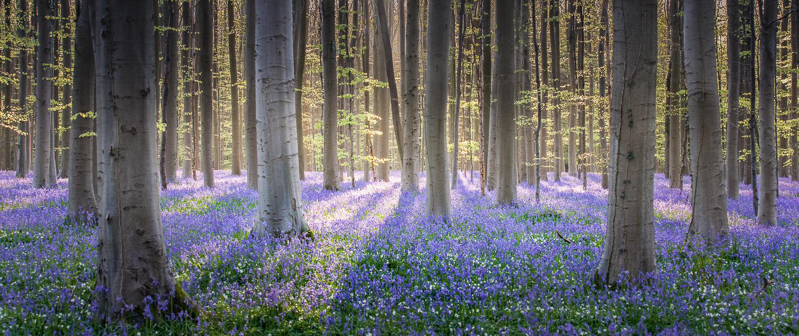 Spring displays his ribbon blue