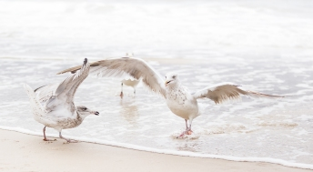 3rd Place Seagulls by André Koschinowski